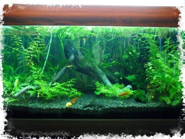 рослини в першому акваріумі