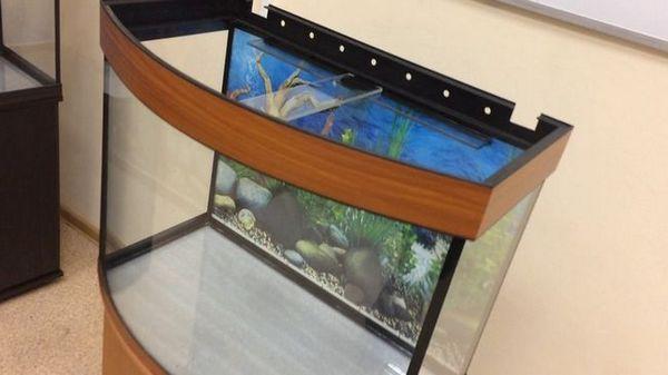 зелаква порожній акваріум