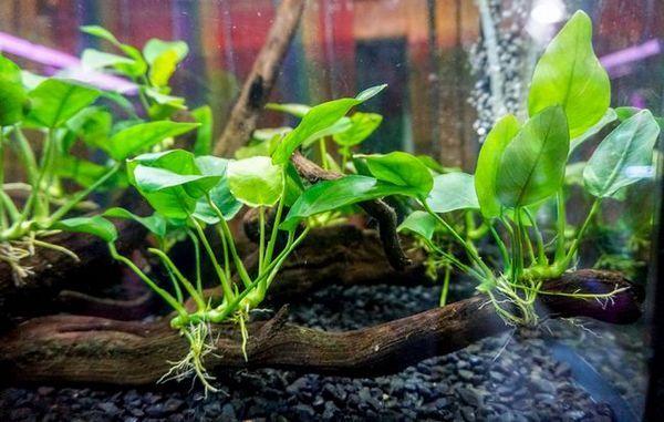 Przegląd popularnych roślin do akwarium