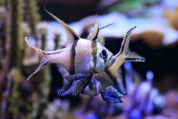 Каде се наоѓаат ретки риби