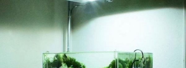 Oświetlenie roślin akwariowych: diody led i tablice led.