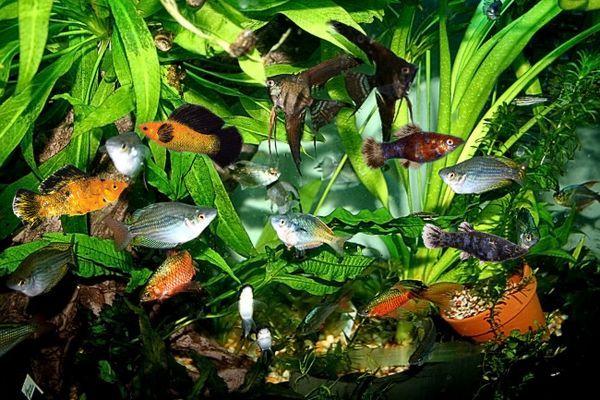 Preľudnené akvárium.