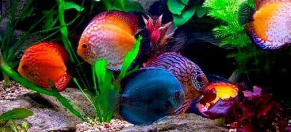 Батьківщини популярних акваріумних рибок
