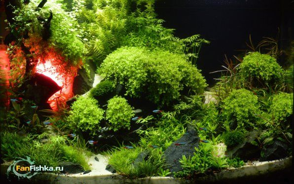 Secretele filtrării unui acvariu cu plante