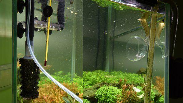 Ieșiri din filtrele de acvariu externe: față și flaut