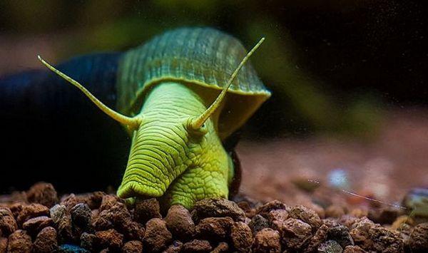 Zawartość ślimaków