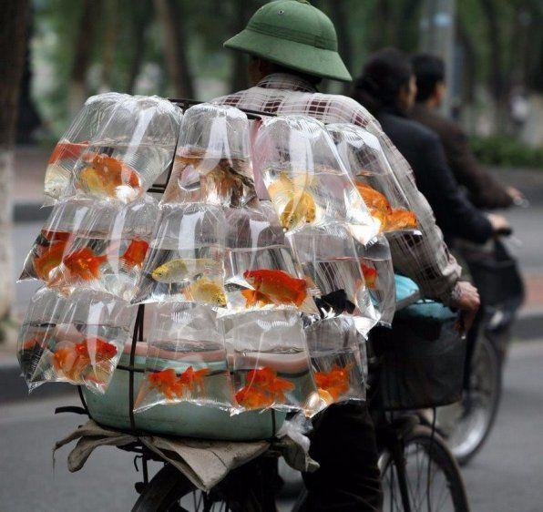 Koľko je rýb?