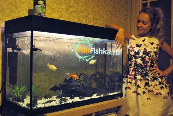 дівчина і акваріум