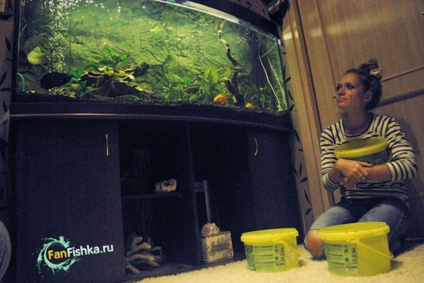 як же змінити воду в акваріумі
