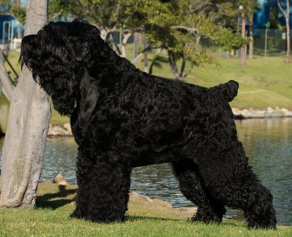 Куче сталин или rht