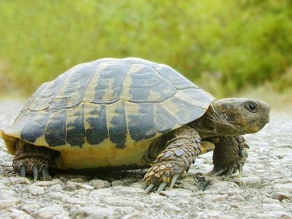 Поддръжка и грижи за костенурката у дома