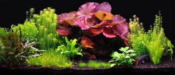 Kompatybilność z roślinami akwariowymi