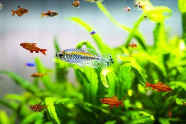 Сумісність акваріумних рибок: поради та рекомендації