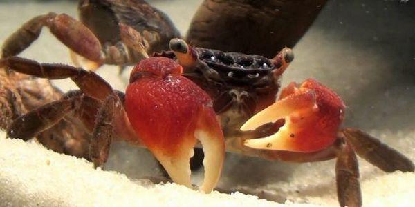 Stwórz niesamowite akwarium namorzynowe