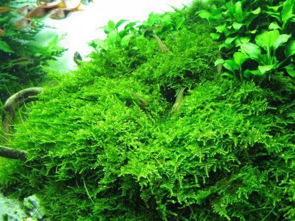 Świąteczne zdjęcie Moss Christmas