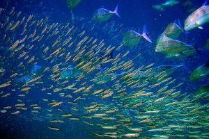 стайня акваріумні рибки