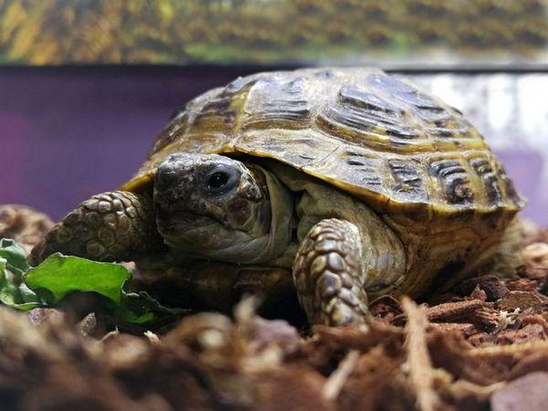 Терариуми за сухоземни костенурки
