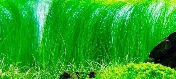 Top 32 bezpretensjonalnych roślin akwariowych