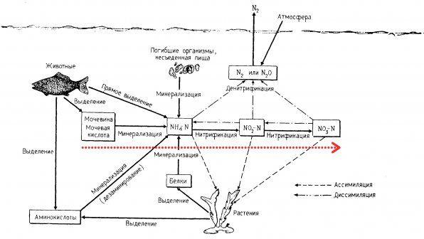 Азотний цикл в акваріумі