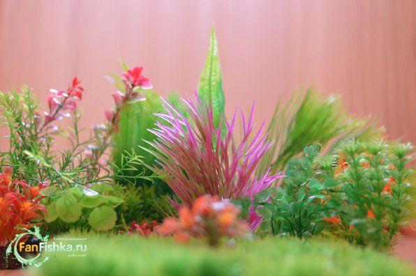 Wszystko o sztucznych roślinach do akwarium