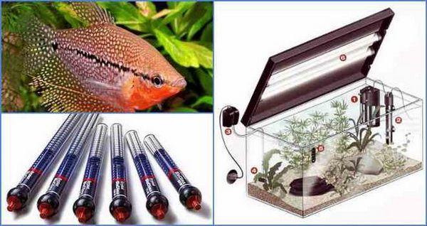 Вибір і установка нагрівача для акваріума