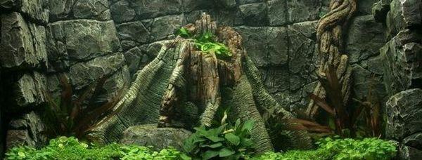 Tło do akwarium: zdjęcie, wideo, szczegółowy opis.