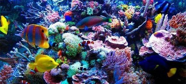Запускаємо морський акваріум у себе вдома