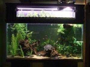 Żywe rośliny do akwarium z żółwiami